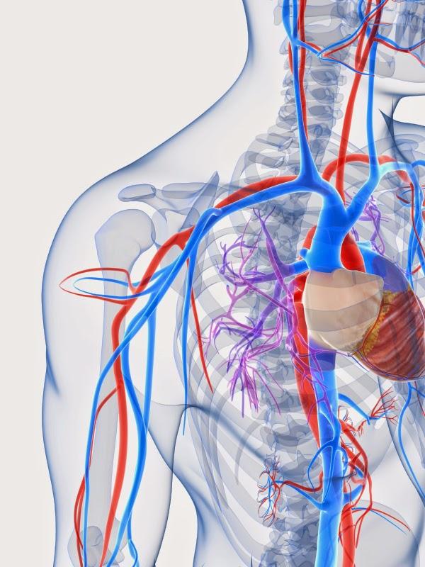 Author Beware Arteries Vs Veins Redwoods Medical Edge