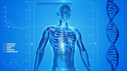 human-skeleton-163715_1280