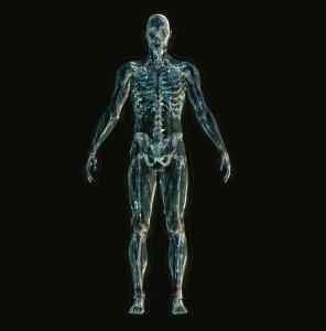 skeleton-1243818_1280